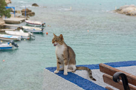 Street cat in Mandrakia village on Milos island, Cyclades, Greece.