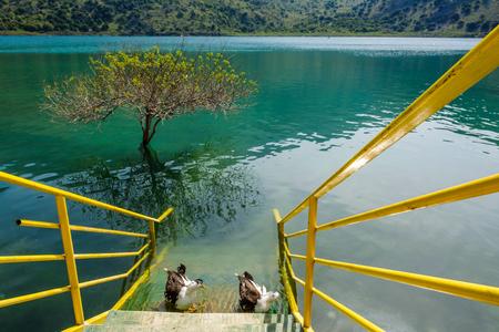 Kournas lake with beautiful fresh emerald water. Crete island, Greece. Banco de Imagens