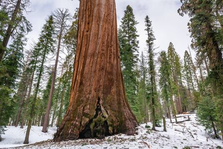Sequoia National Park in California. The park is notable for its giant sequoia trees. USA