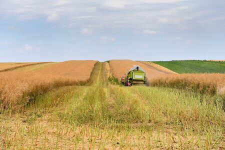 Harvester machine to harvest wheat field working. Agriculture 版權商用圖片