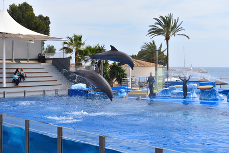 Mallorca, Spain - May 8, 2019: Dolphin show at Marineland on Mallorca