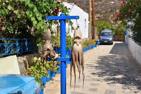 Drying octopus on the street. Sifnos island, Cyclades, Greece.