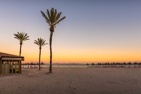Palm trees at the Playa de Alcudia beach in Mallorca, Spain Stok Fotoğraf
