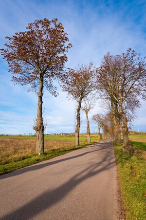 Country road among trees in northern Poland. Europe