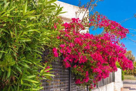 Summer flowers on street in Alcudia town on Majorca island. spain 스톡 콘텐츠
