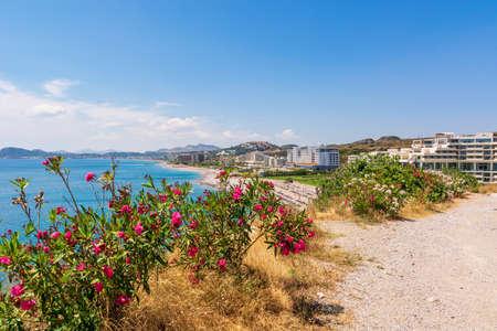 Summer flowers growing on Faliraki beach. Rhodes island, Greece Standard-Bild