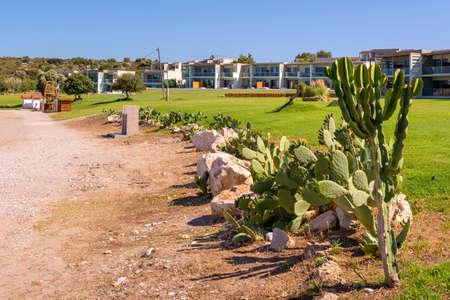 Tropical plants growing along beach in Kolymbia. Rhodes island, Greece