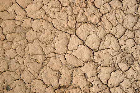 Dry and cracked ground. Texture with natural patterns. 免版税图像