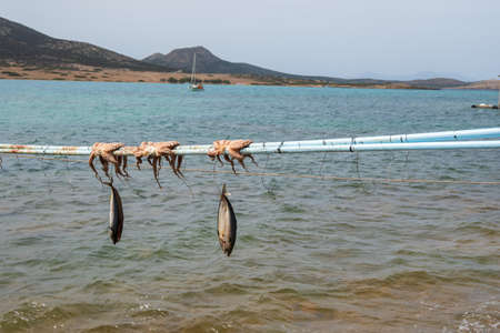 Drying fish and octopus by the Aegean Sea. Antiparos Island, Cyclades, Greece. 免版税图像