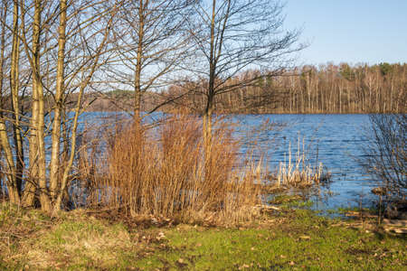 Spring time on the shore of the lake in Kashubia in Poland. 免版税图像