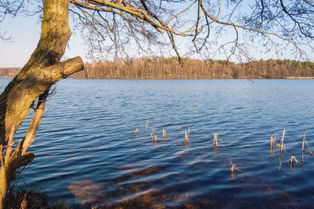 Tree on the shore of lake in early spring. Kashubia in Poland 免版税图像