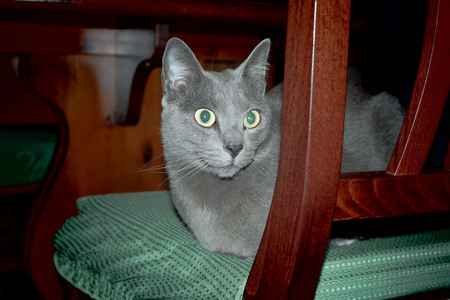 grey cat: GREY CAT Stock Photo