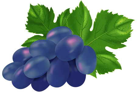 blue berry: Blue grapes.