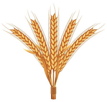 ripe: Ripe wheat. Illustration