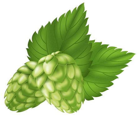 brewery  hops: Hops. Illustration