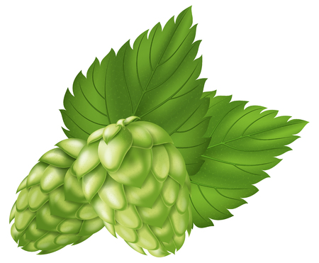 Hops. Illustration