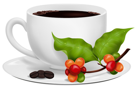 coffee berry: Coffee Cup with Roasted Beans and Fresh Green Coffee Branch. Illustration