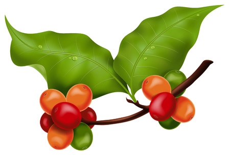 Coffee branch. Photo-realistic illustration.