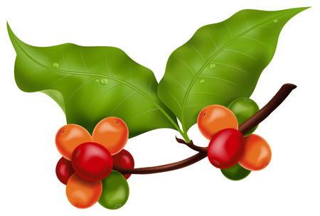 leaf illustration: Coffee branch. Photo-realistic illustration.