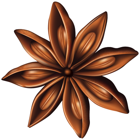 star anise: Star anise. Vector illustration.