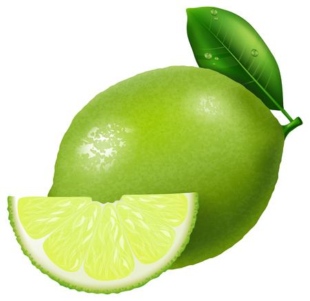 illustration: Lime illustration