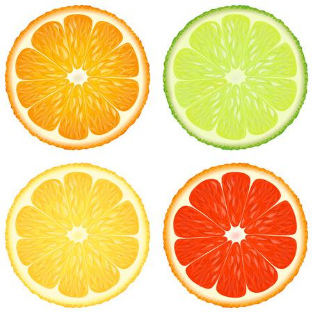 Citrus slices. A set of four - orange, lime, lemon and grapefruit. Vector design elements.  イラスト・ベクター素材