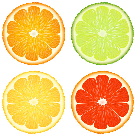 Citrus slices. A set of four - orange, lime, lemon and grapefruit. Vector design elements. Illustration