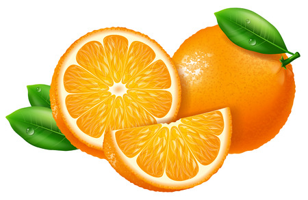 Oranges, slices and whole. Vector illustration.