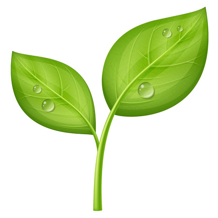 Young green sprout. Vector illustration.