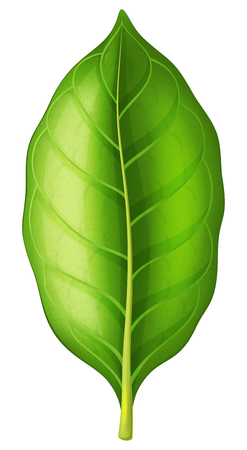 Tobacco leaf on white background. Vector illustration. Vettoriali