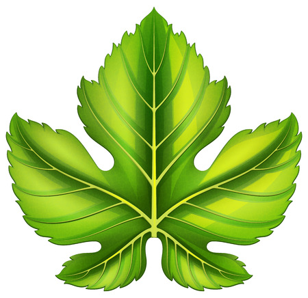 Grape leaf. Vector illustration. Illustration