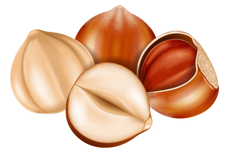 Hazelnut whole and half split. Vector illustration.
