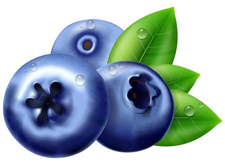 Reife Blaubeere mit Blättern. Vektorillustration.