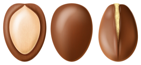 Argan nut whole and half split. Realistic vector illustration. 일러스트
