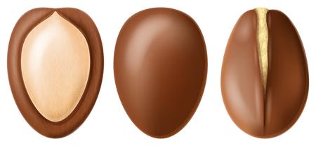 Argan nut whole and half split. Realistic vector illustration. Illustration