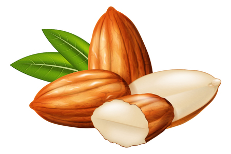 Almond nuts whole and half split with green leaves in the background. Vector illustration. Иллюстрация