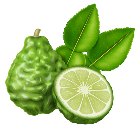 Kaffir lime or makrut lime. Vector illustration.