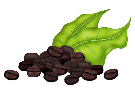 Roasted coffee beans with fresh coffee tree leaves.