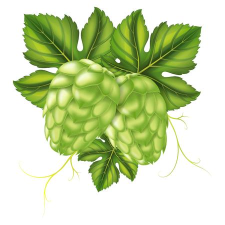 Hops. Vector illustration. Illustration