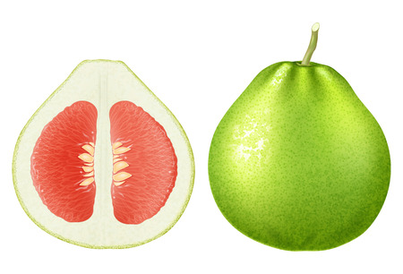Fresh red pomelo. Vector illustration.