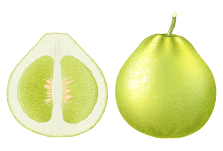 Fresh green pomelo. Vector illustration. Иллюстрация