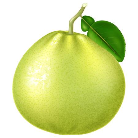 Fresh green pomelo. Vector illustration. Illustration