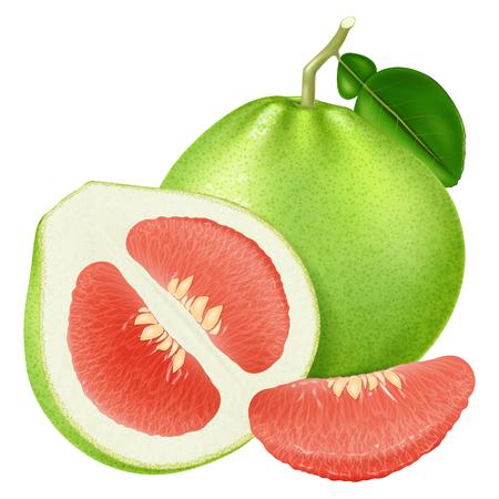 Pomelo rouge frais. Illustration vectorielle.