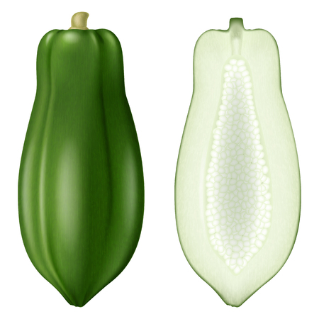 Green papaya. Vector illustration. Illustration