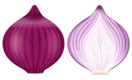 Rote Zwiebel, ganz und halb. Vektor-Illustration.
