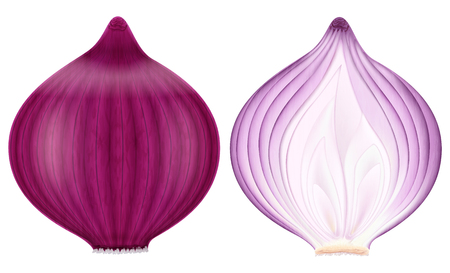 Red onion, whole and half. Vector illustration.