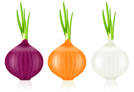 Set of onions with fresh green sprouts. Vector illustration.