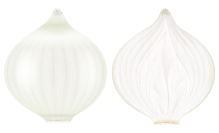 White onion, whole and half. Vector illustration.