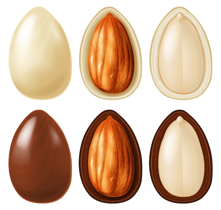 Almond nut dragees in dark and white chocolate. Vector illustration. Illustration