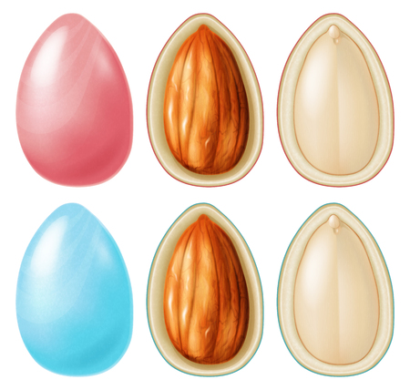 Almond nut dragees. Vector illustration.